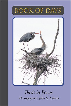 Book of Days - Birds in Focus (Bulk/Wholesale)