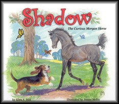 Shadow: The Curious Morgan Horse