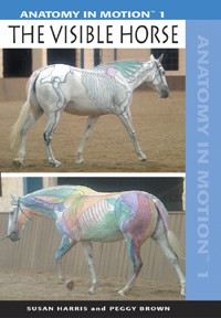 Anatomy in Motion 1: The Visible Horse (DVD)